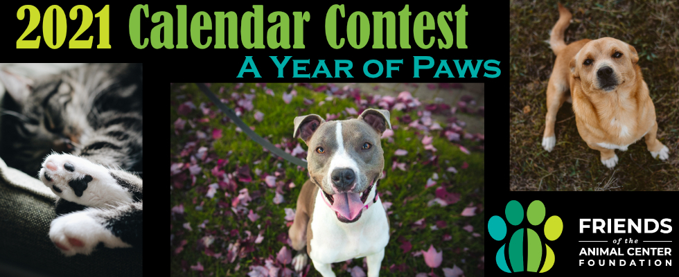 A year of paws calendar contest