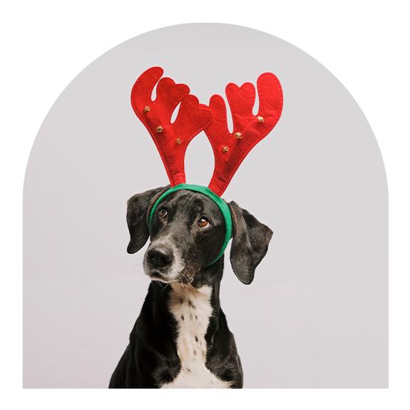 Dog with reindeer antlers