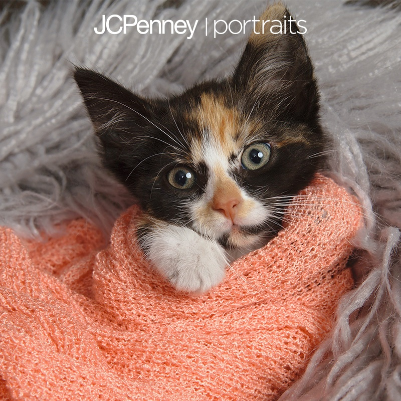 A treat for you and your pet from JCPenney Photography