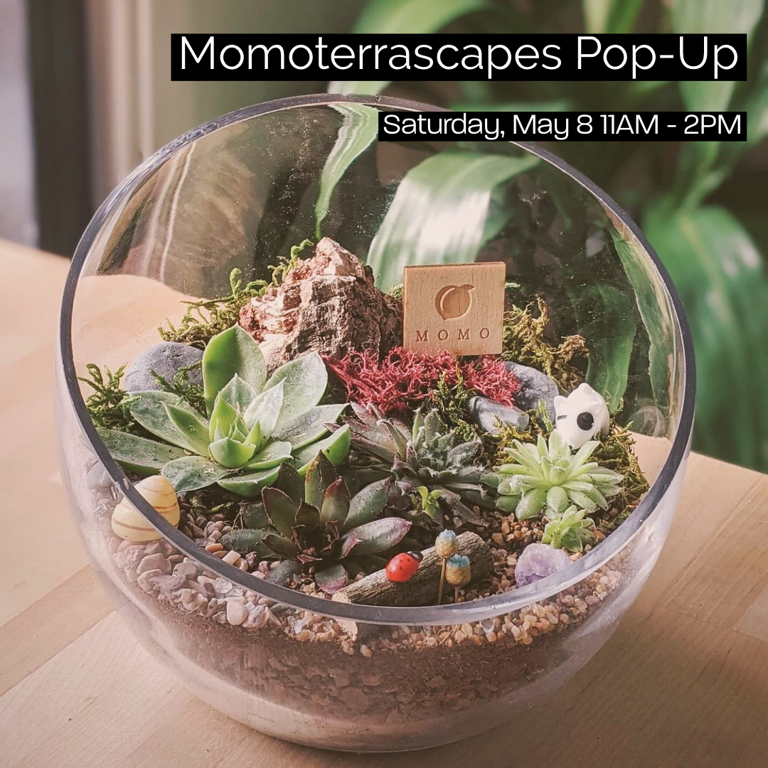 Momo Terrascapes pop-up from Allison Izu